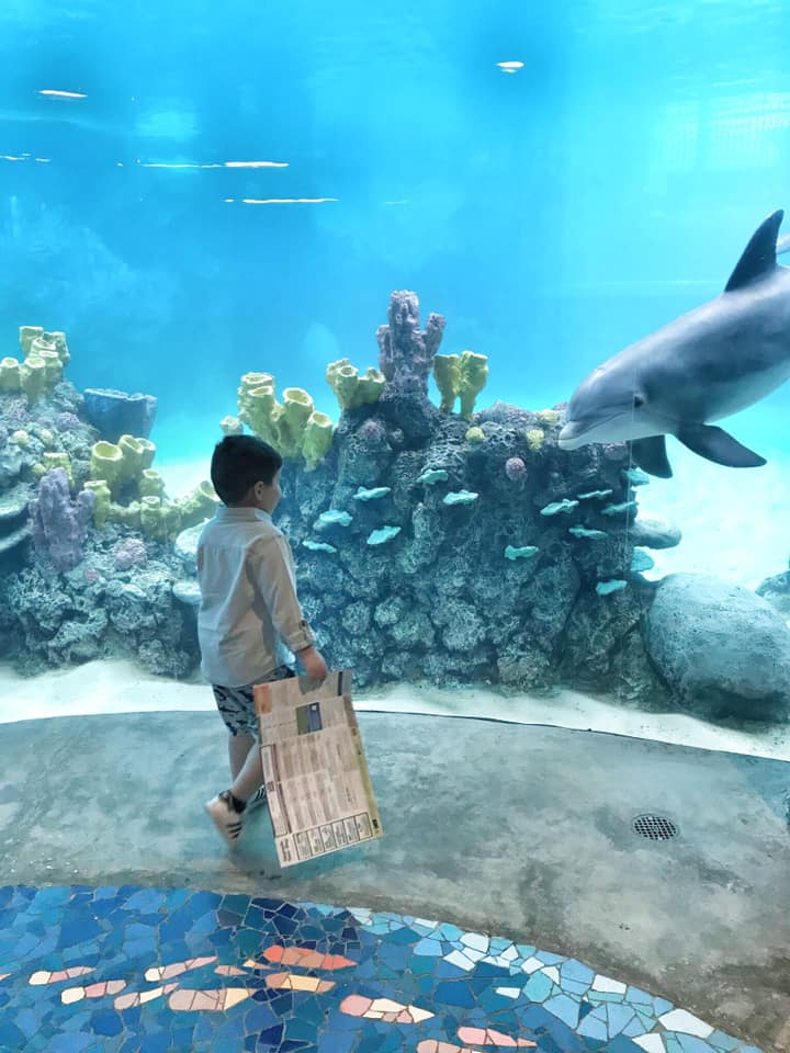 Little boy looking at sea life in aquarium at SeaWorld in San Antonio.   Week in San Antonio, Texas
