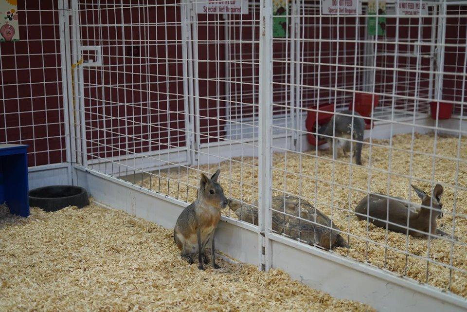 Baby animals at the fair. | State Fair of Texas-Dallas