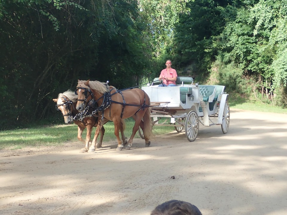 Carriage ride at the lake.| The Retreat at Artesian Lakes in Texas