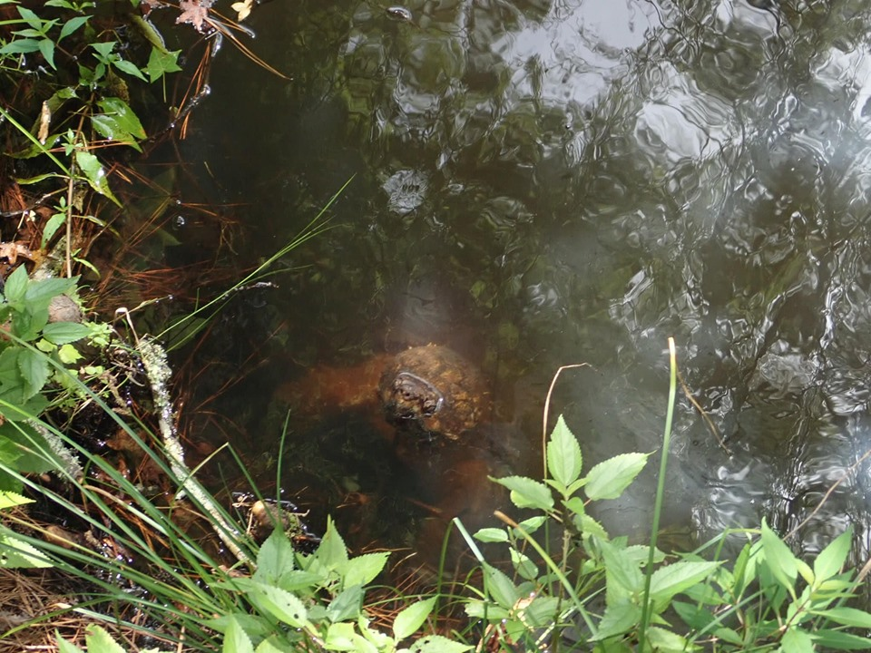 Wildlife at the lake.| The Retreat at Artesian Lakes in Texas