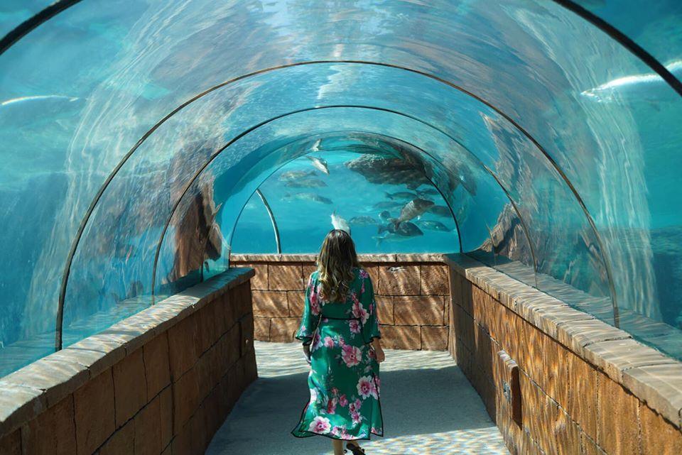 Woman walking through aquarium tunnel at the Atlantis resort.   Atlantis, Bahamas