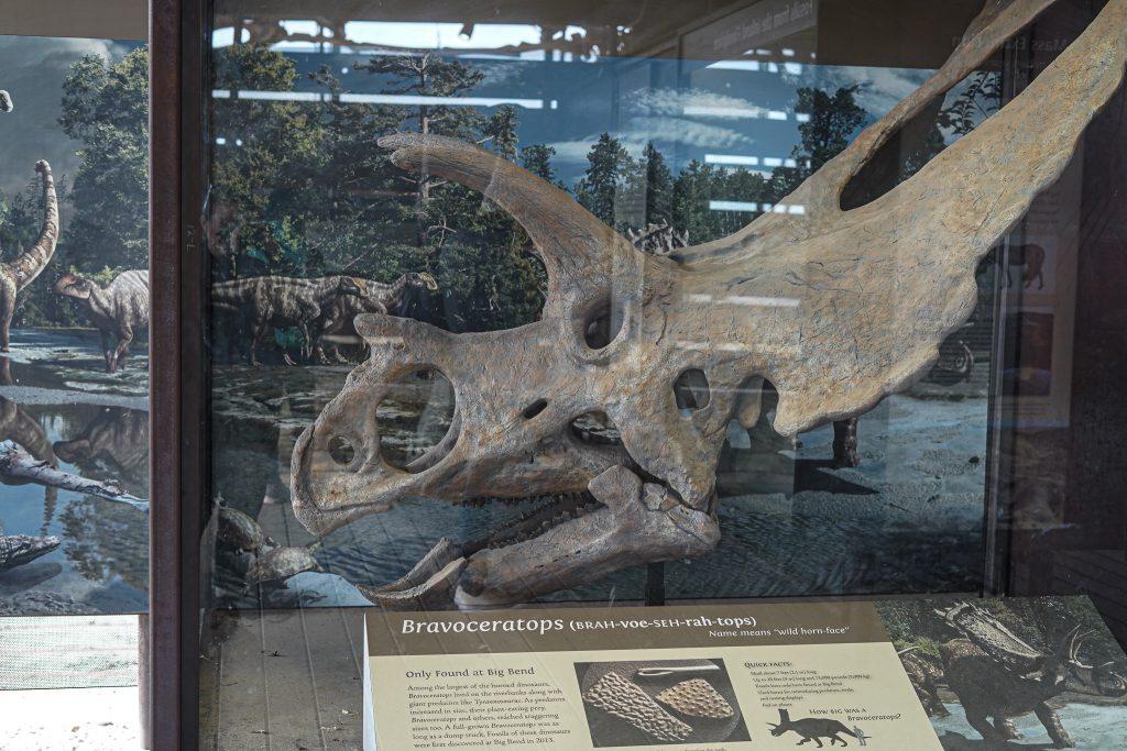 Bravoceratops display at Big Bend. | Big Bend National Park 1-Day Itinerary