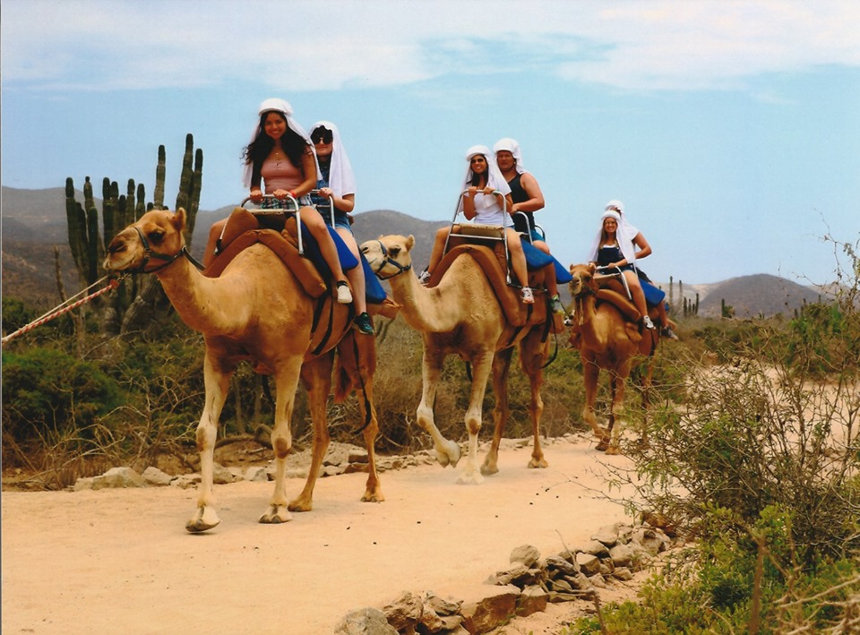 Group of people riding camels in Cabo.   Cabo, Mexico- The Best All Inclusive Vacation