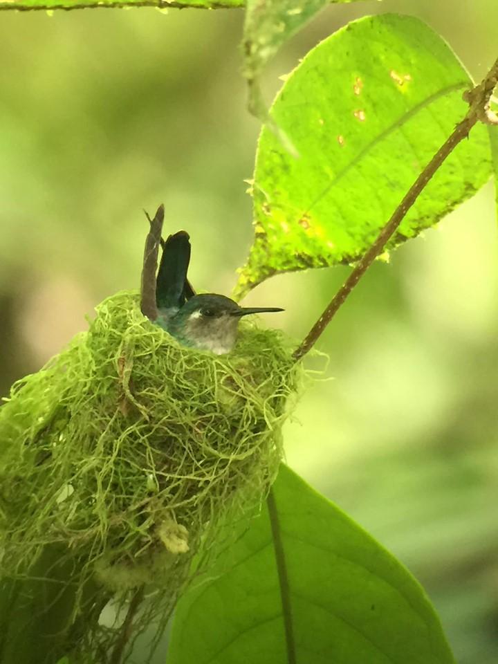 Wildlife at La Fortuna Waterfall in Costa Rica.   Costa Rica, Arenal Volcano
