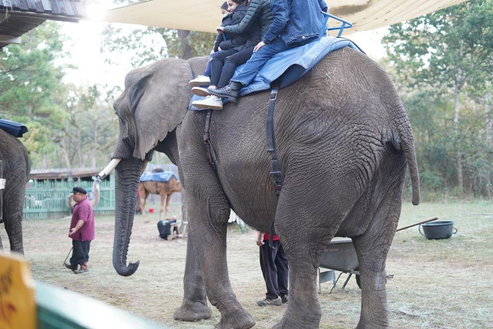 People riding an elephant at the festival. | Texas Renaissance Festival