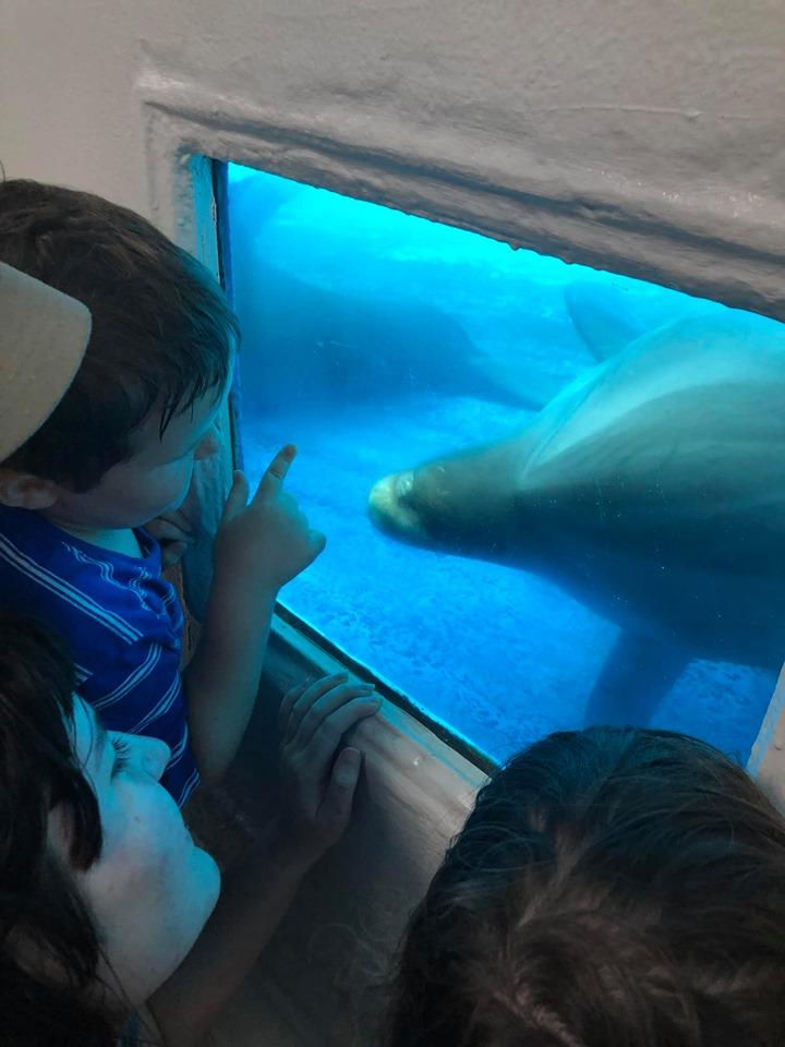 Kids looking at the sea creatures at the Gulfarium Marine Adventure Park in Destin.   Destin, Florida with the Kids