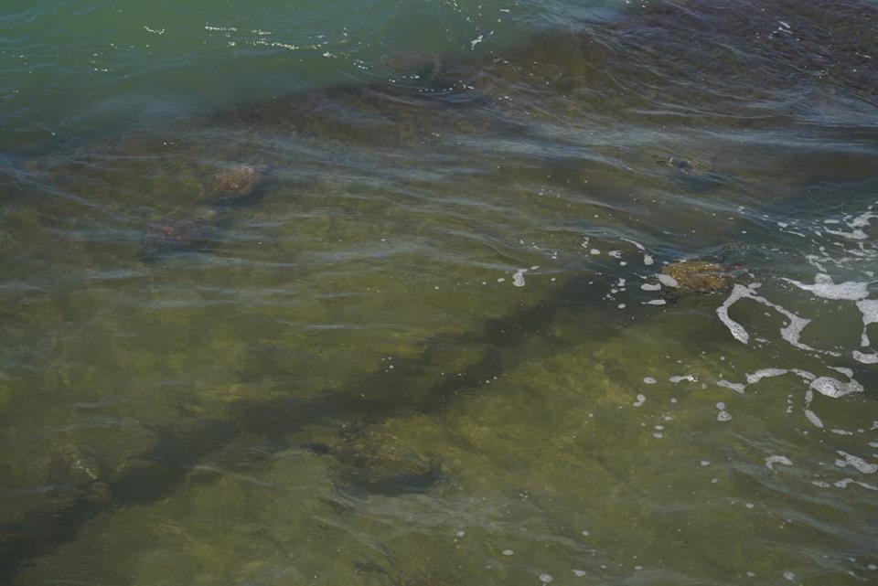 Sea turtles in the water at Corpus Christi.   Corpus Christi Bachelorette Weekend