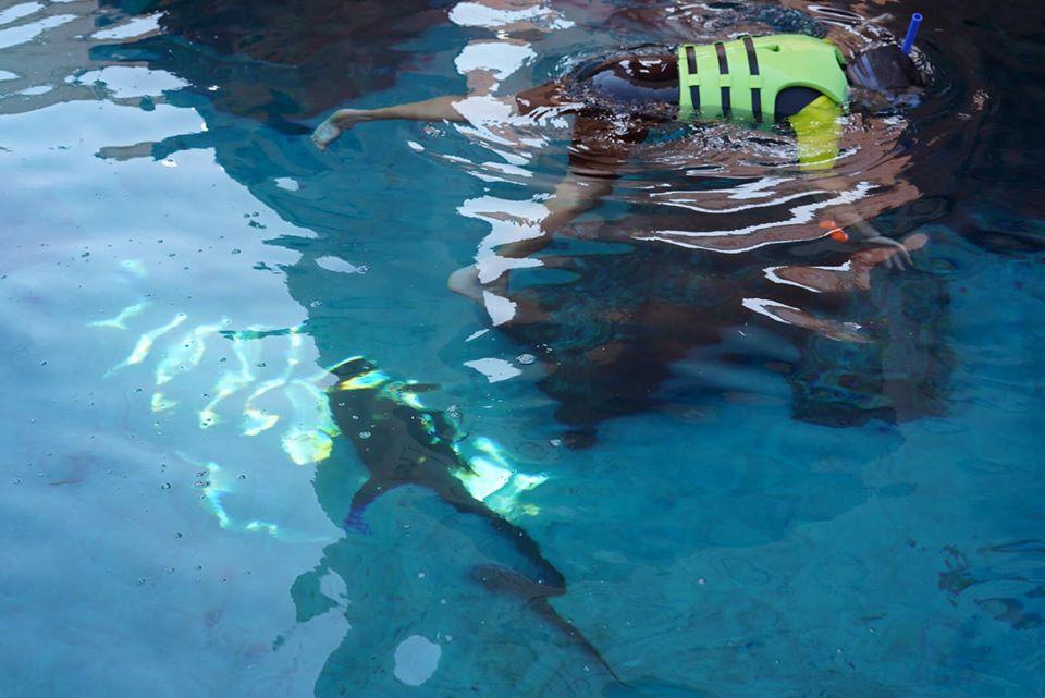 Man snorkeling in the water at the Atlantis resort.   Atlantis, Bahamas