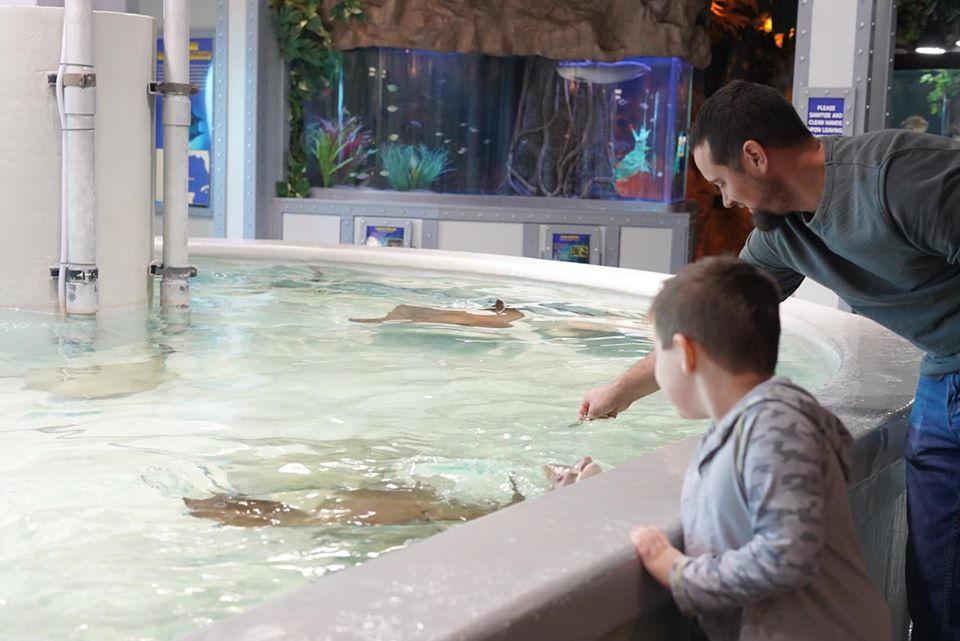 Man with little boy trying to pet the stingrays at Stingray Reef at Kemah Boardwalk. | Kemah Boardwalk in Texas