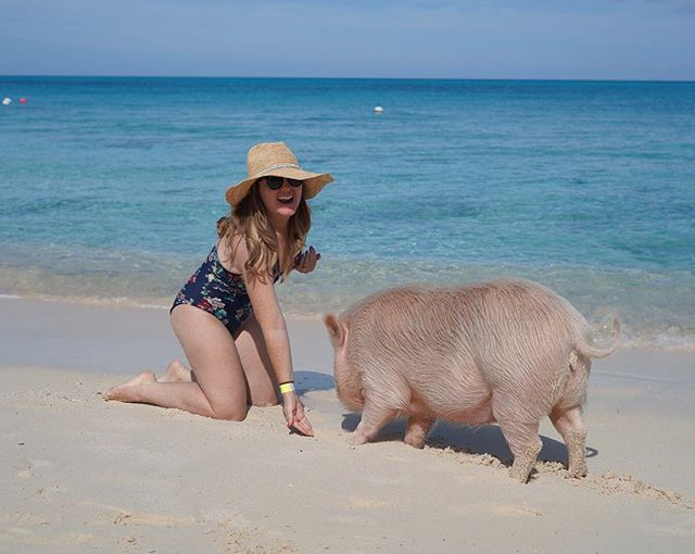 Woman feeding a pig on the beach at the Atlantis resort.   Atlantis, Bahamas