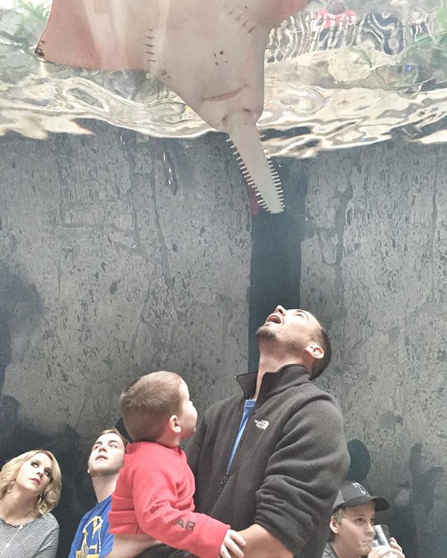 Crowds looking up at stingrays in the water at the Dallas World Aquarium.| Weekend in Dallas with Kids