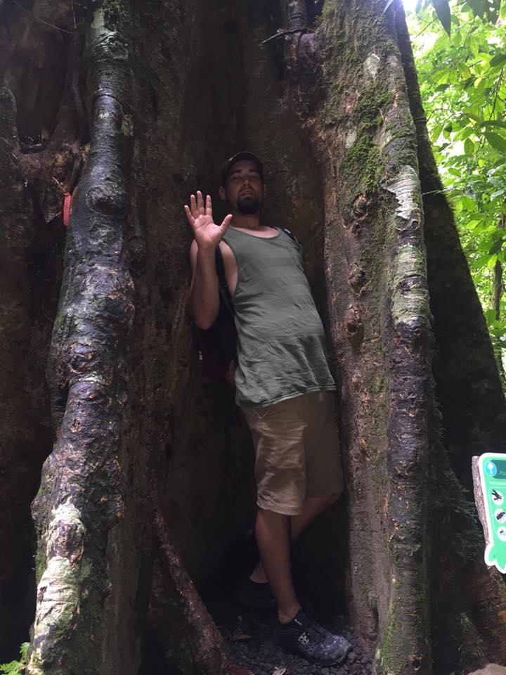 Man posing inside a giant tree in La Fortuna Waterfall in Costa Rica.   Costa Rica, Arenal Volcano