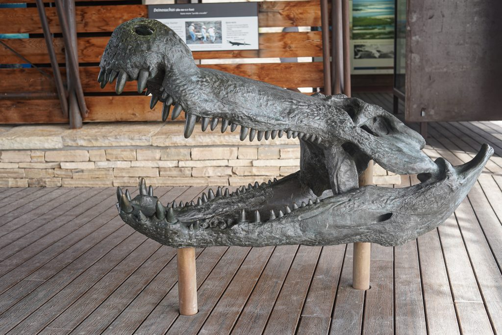 Alligator fossil display at Big Bend. | Big Bend National Park 1-Day Itinerary