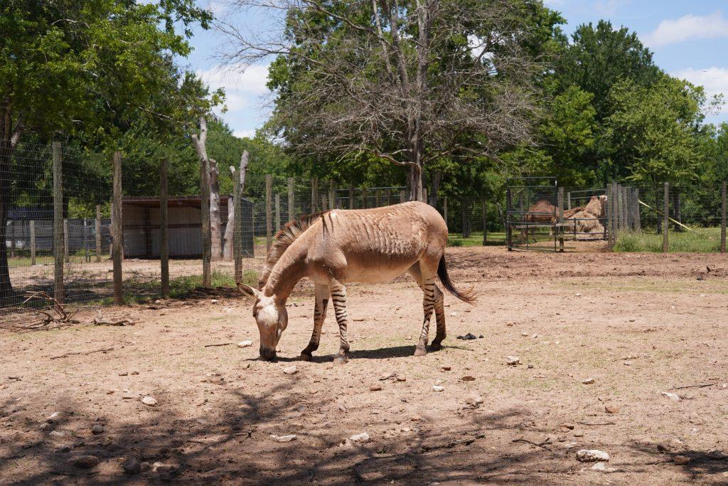 Animals on the farm at Animal Encounter at Blessington Fields. | Blessington Farms in Simonton, Texas