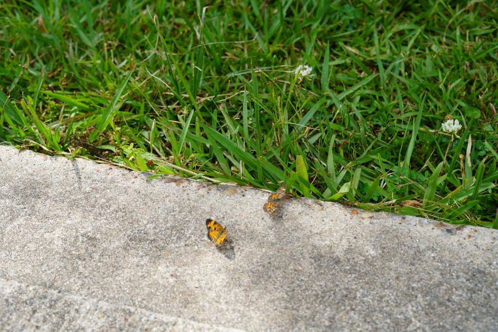 Baby butterflies on a path at the nature park in League City. | 6 Things for Families to do at a Nature and Wildlife Park