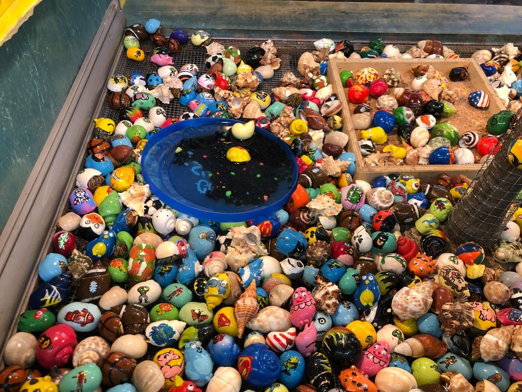 Large amount of colorful hermit crabs.   Guide to Gulf Shores & Orange Beach Alabama