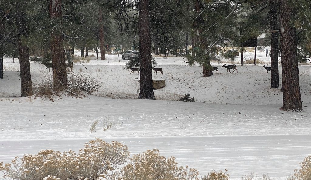 Family of deer grazing in the snowy woods.| Grand Canyon Railway in Arizona