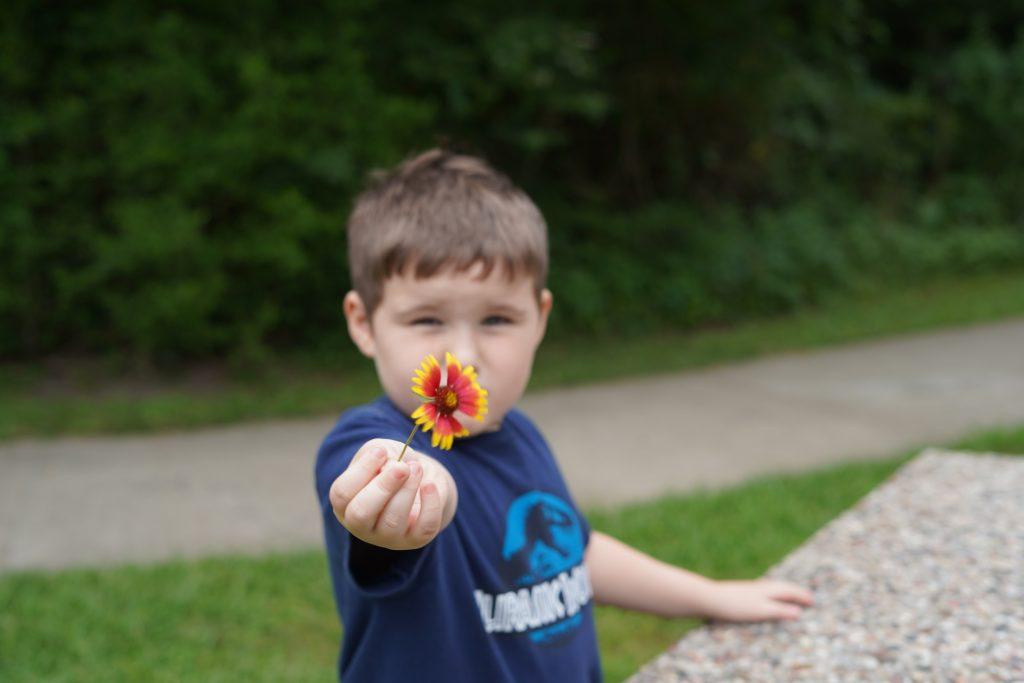 Little boy holding a flower on a path at the nature park in League City. | 6 Things for Families to do at a Nature and Wildlife Park