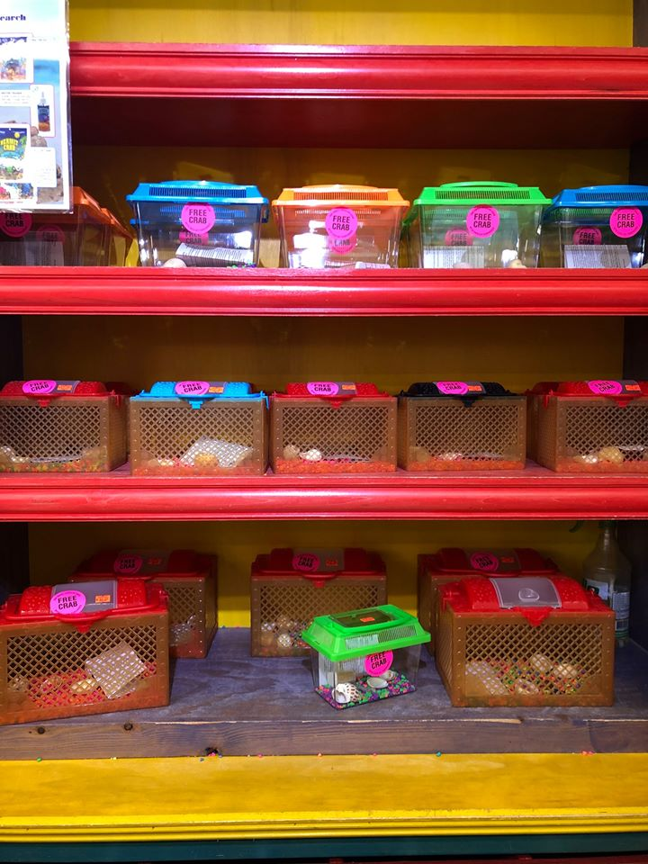 Shelves filled with hermit crabs in cages.   Guide to Gulf Shores & Orange Beach Alabama