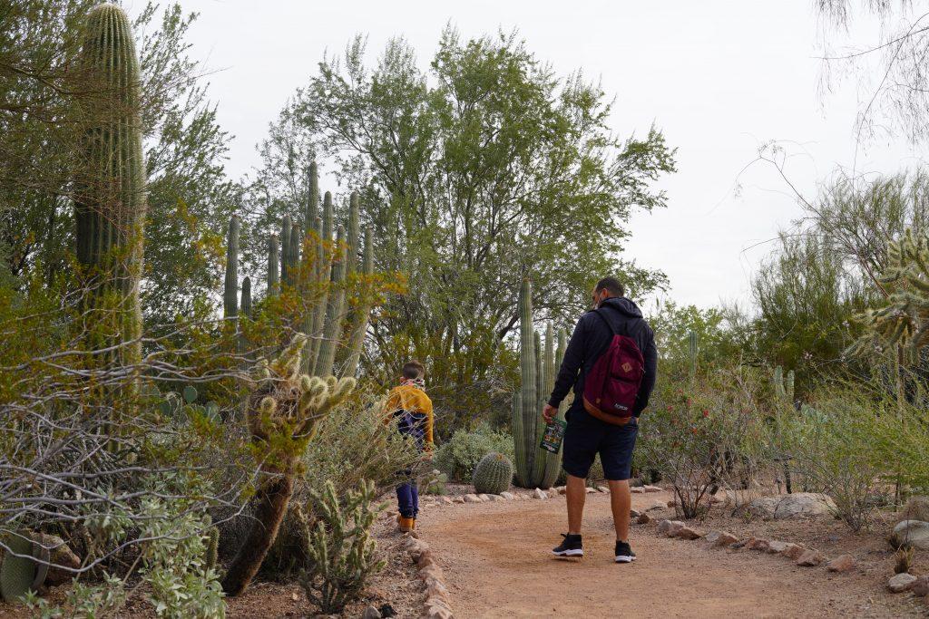 Man and child hiking in Arizona. | Desert Botanical Gardens in Arizona