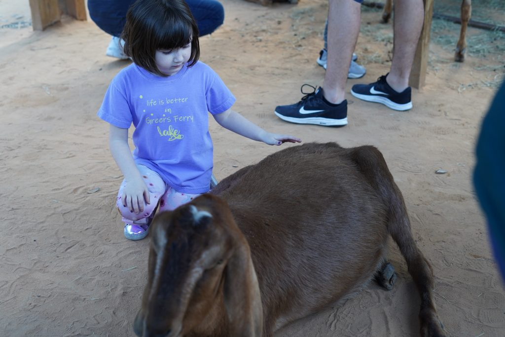 Little girl petting animals at the petting zoo. | The Houston Zoo