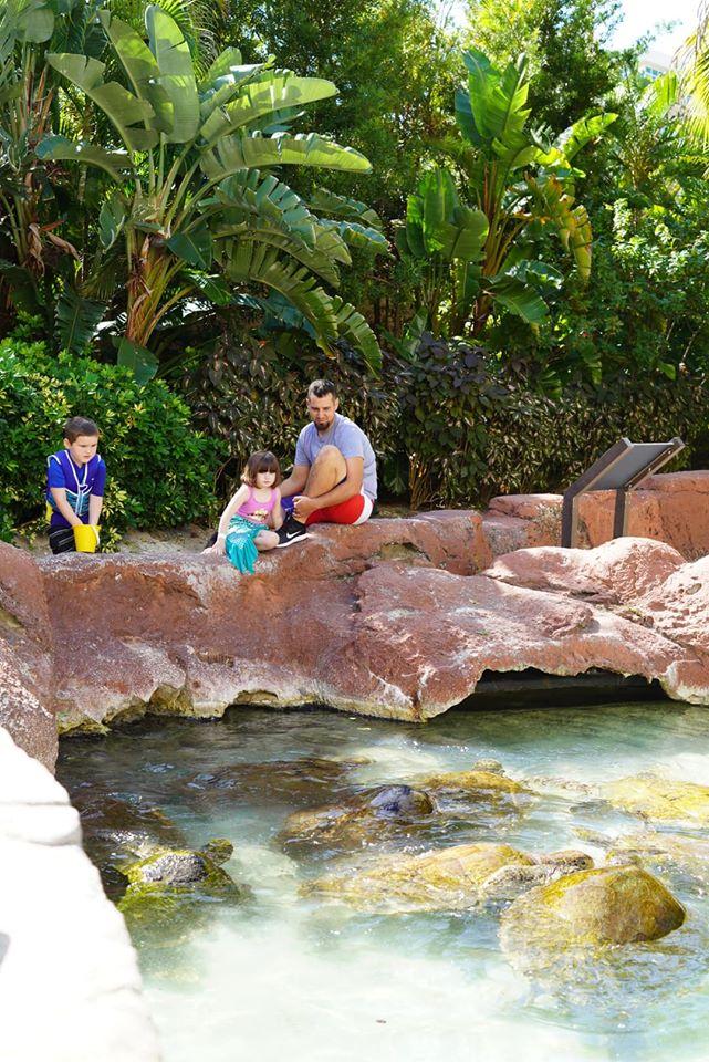 Dad and two kids looking at the sea turtles in the water at the Atlantis resort.   Atlantis, Bahamas