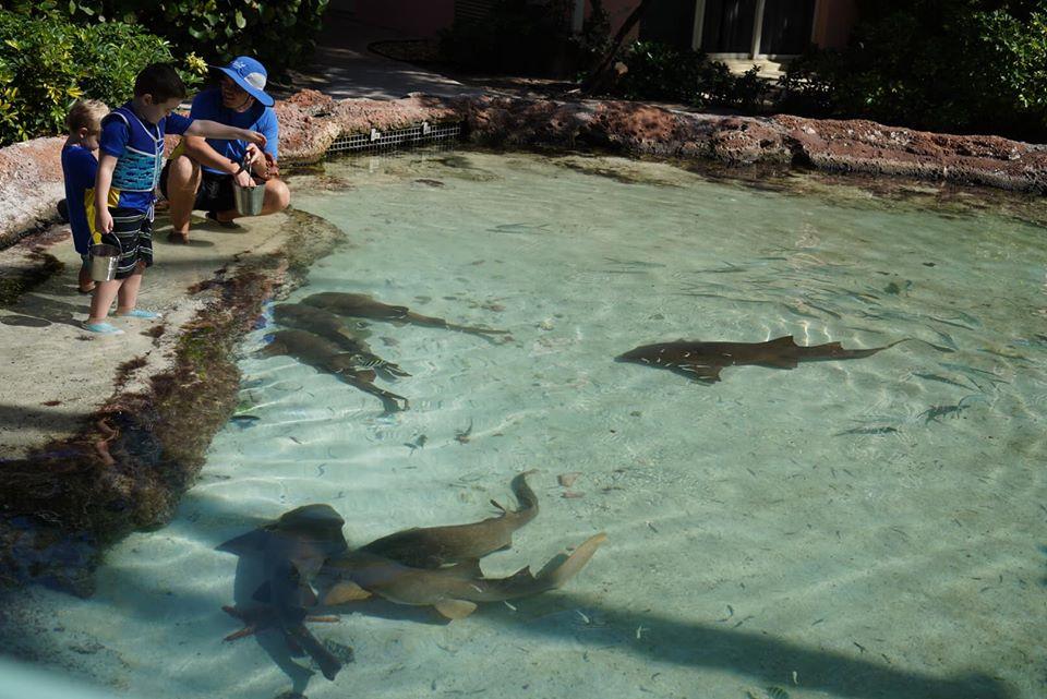 People looking at the sharks in the water at the Atlantis resort.   Atlantis, Bahamas