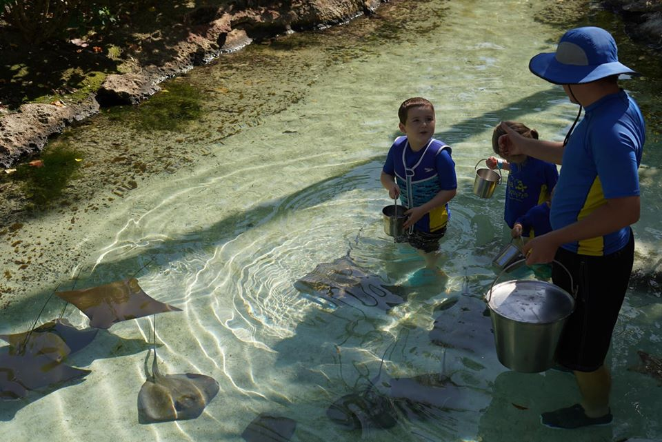 Kids and guide feeding the stingrays in the water at the Atlantis resort.   Atlantis, Bahamas
