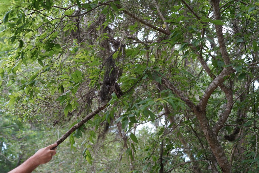 Man grabbing something out of a tree with a stick on a path at the nature park in League City. | 6 Things for Families to do at a Nature and Wildlife Park